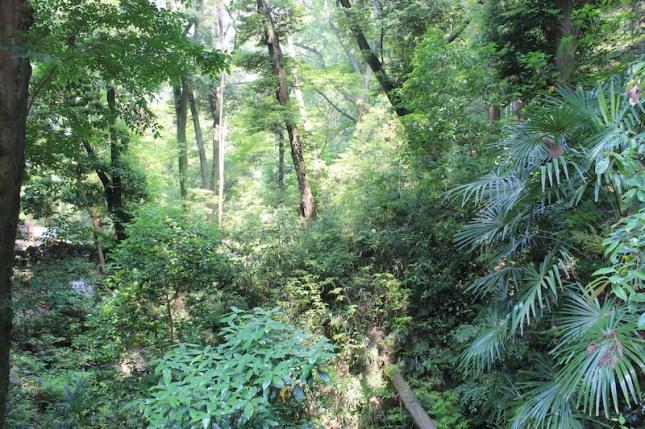 La forêt de la montagne Inari, de quoi être dépaysé
