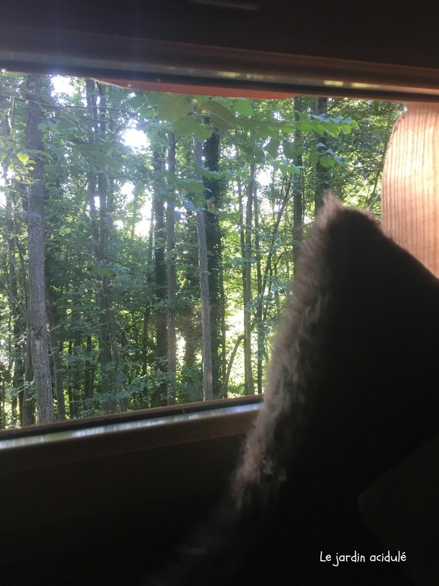 Cabanes dans les arbres2823