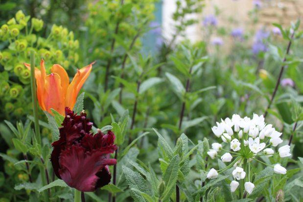 Le Jardin Contemporain // The Contemporary Garden - Barry Watton Garden Designs
