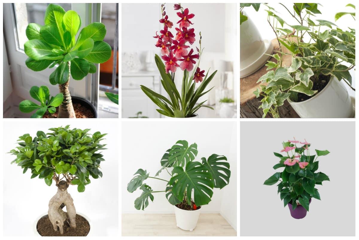 plante verte comment choisir une