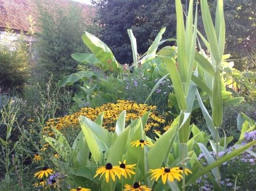 Arundo, cannas, le jardin d'épices Laurent Lafaille
