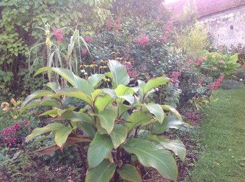 canna, fuschsia du Cap, le jardin d'épices Laurent Lafaille
