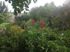 canna rustiques rouges, jardin exotique, le jardin d'épices