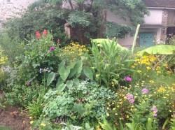 colocasia, massifs d'été le jardin d'épices Laurent Lafaille