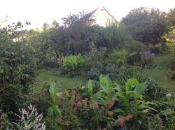massifs d'été, touffes de cannas, le jardin d'épices Laurent Lafaille