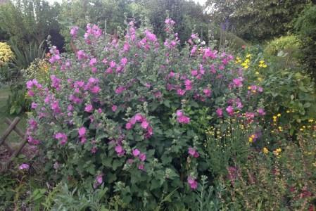 Vivaces à longues floraisons