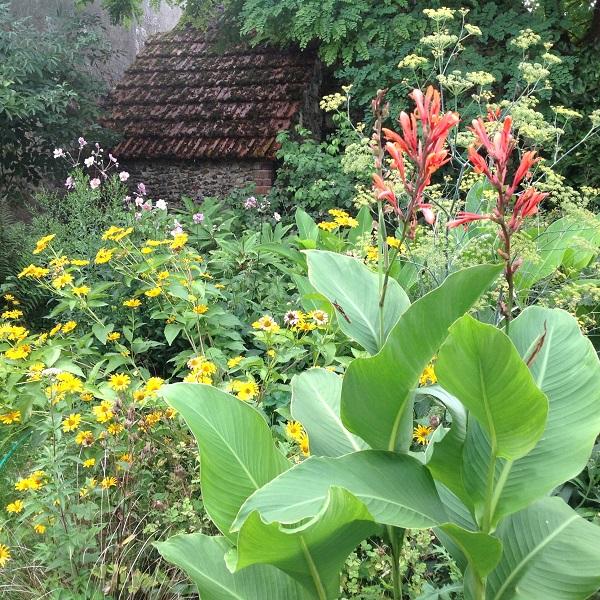 Créer un jardin tropical - Le jardin d\'épices