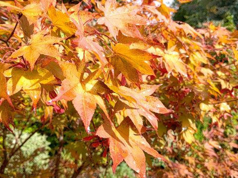 entretien du jardin en automne