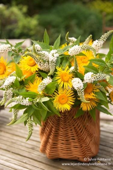 un gros bouquet d'inula helenium et  de lysimachia clethroides à installer dans un grand vase,