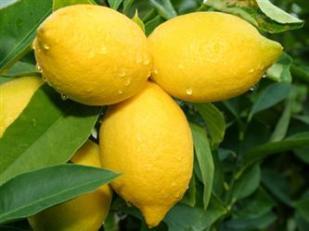 When_life_gives_you_lemons