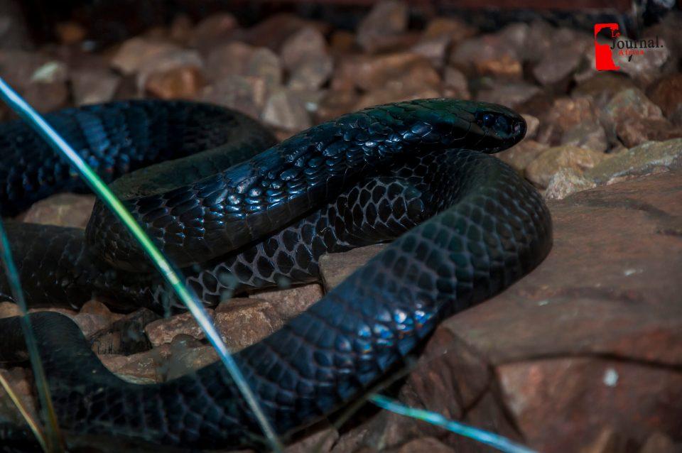 Serpent au Misé vivant de Bujumbura