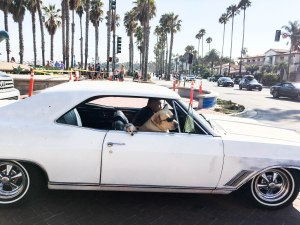 dogs-santabarbara-palmtrees-usa-beach-cars-america