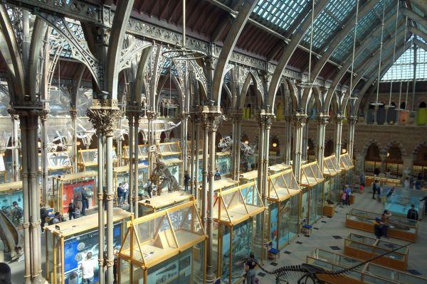 musée d'histoire naturelle à Oxford