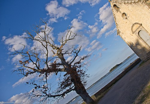 arbre mort-ile-aux-Moines-5073-aout2013