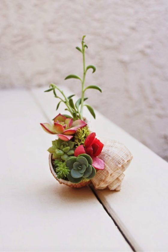 Plant mini succulents inside a seashell for an adorable coastal home accessory