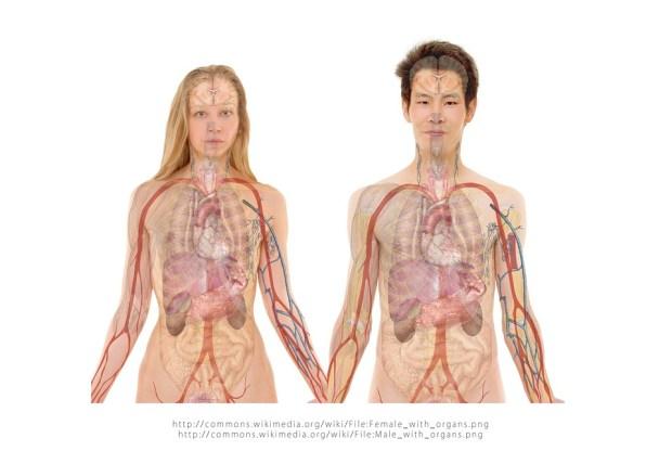 Pengertian, Fungsi, dan Kandungan Getah Pankreas