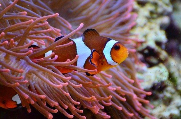 Cara Menjernihkan Air Kolam Ikan Yang Keruh Namun Aman