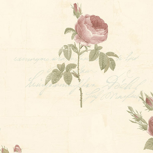 CG28861 Patton Wallcoverings Rose Garden 2 Rose Script Wallpaper Cream