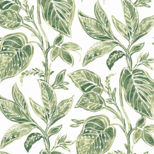 3120-13621 Brewster Wallcoverings Chesapeake Sanibell Sun Kissed Collection Mangrove Botanical Wallpaper Green