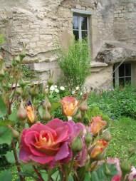 les roses au printemps