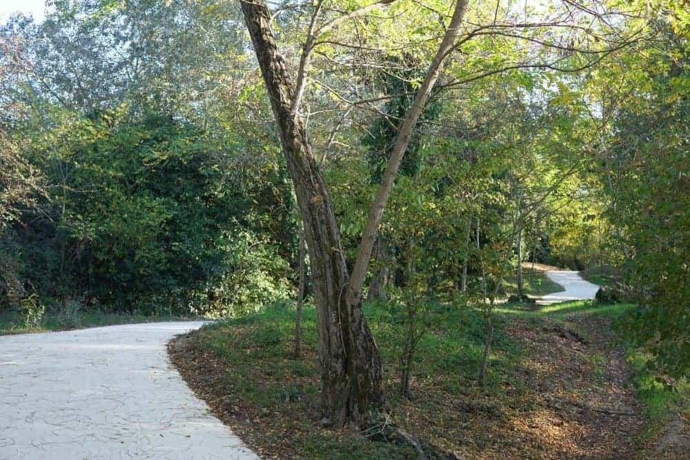 Saumonards forest cycling trails, ile d'Oleron, France