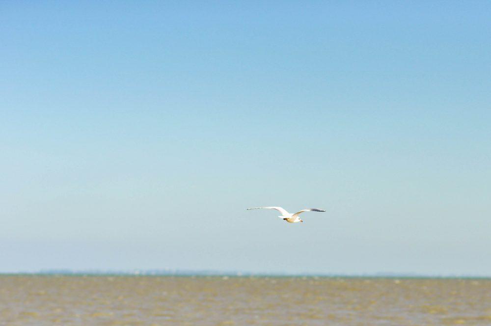 Seagull over Fort Royer Beach, Oleron Island