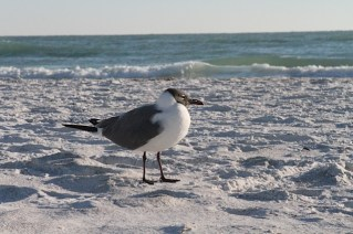 SandPipers (Lido Key)