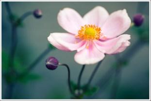 Pretty flower & unborn sisters