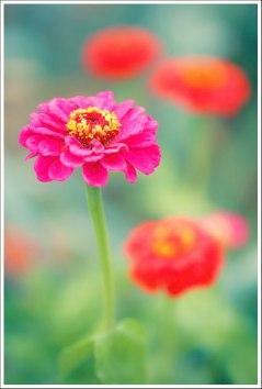 Flashy Flower