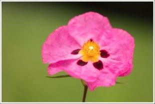 La fleur en crépon