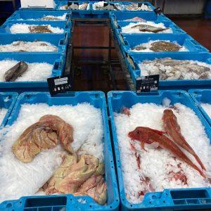 Les poissons, filets et dos de poissons