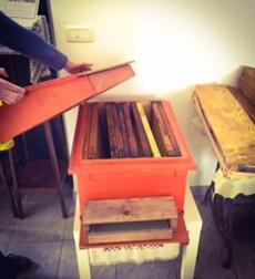#lemarchemagic #lemarche #agriturismo #farmlife #bio #goodliving #Italianadventures #worldofbees #chickens #bnb #FonteCarrà #Bees #beehives