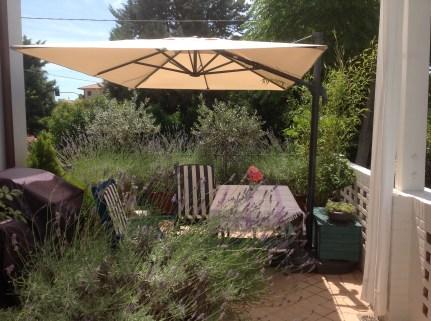 Over grown terrace