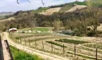#labibioteca #lemarchemagic #farmtotablefood #bio #farmfood