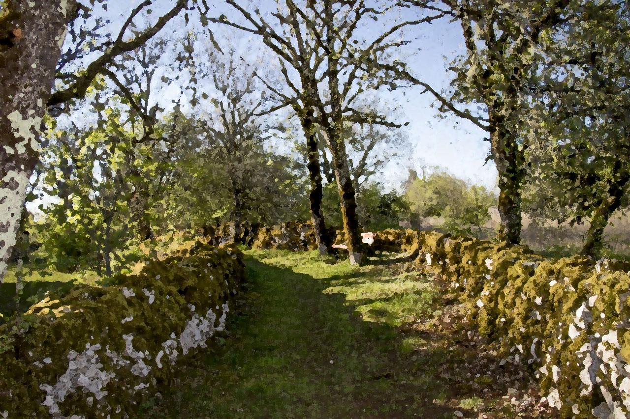 lot-gîte-location-46-randonnée-forêt