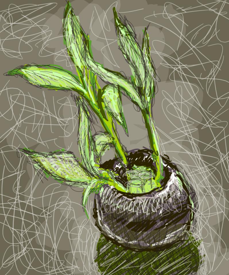 20121126: Lucky Bamboo sketch by John LeMasney via 365sketches.org #cc #design
