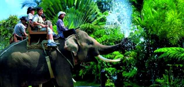 Bali Elephant Safari Park Tour