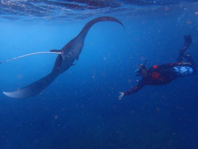 Perjalanan Snorkeling Dari Bali Ke Nusa Lembongan Dan Nusa Penida Lembonganwatersport Com