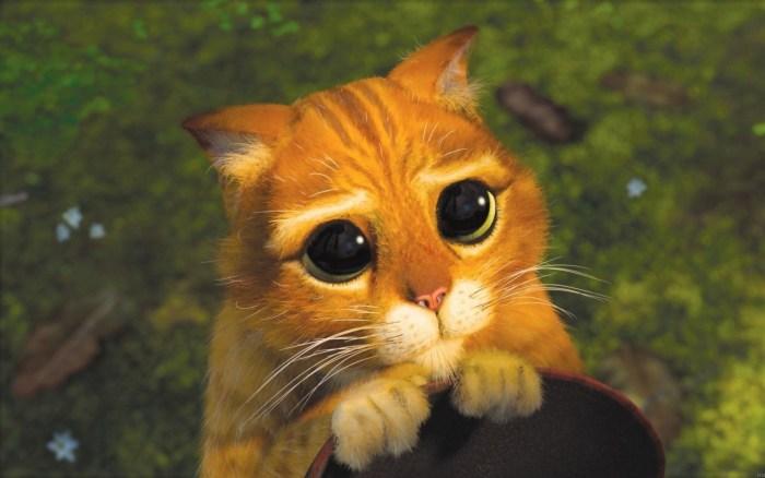 le-chat-potté-shrek-mignon