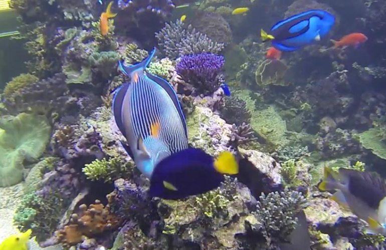 Pasi Haillan merivesiakvaario