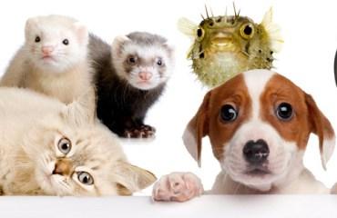 Lemmikkieläimet - lemmikit