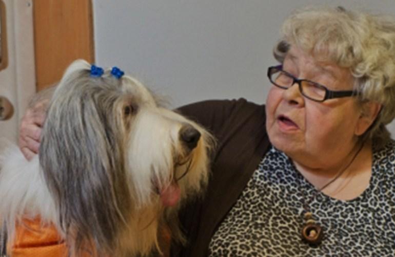kaverikoirat, kaverikoira, kennelliitto, koira, koirat, koiran hoito, koiran kasvatus, lemmikki, lemmikit, lemmikkieläin, lemmikkieläimet