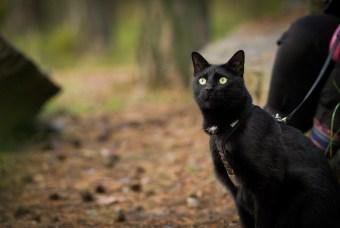 Onko kissan kanssa retkeily mahdollista?