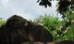 kilimanjaro-safari-3