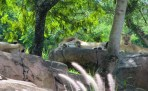 kilimanjaro-safari-4