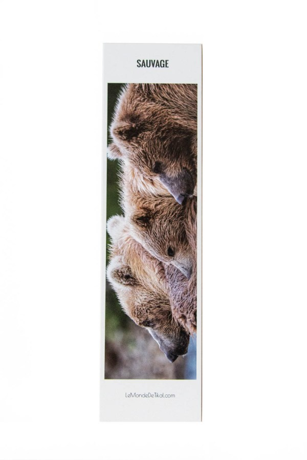 marque-page ours bruns photos animaux