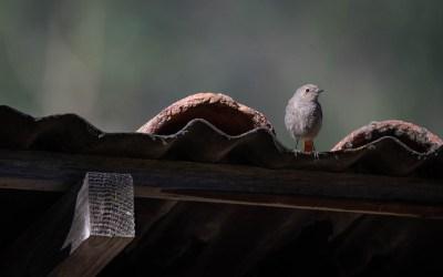 Quiz Sauvage – Spécial Oiseaux du jardin