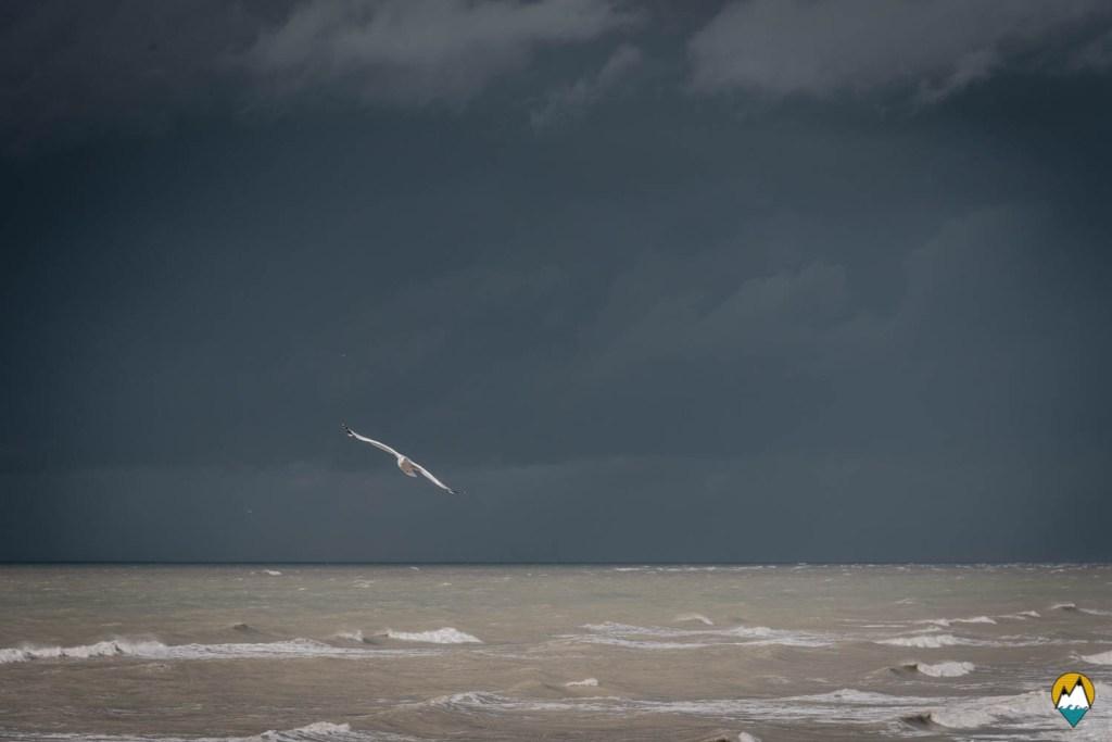 Baie de Somme - plage de Cayeux-sur-Mer - goéland et ciel noir