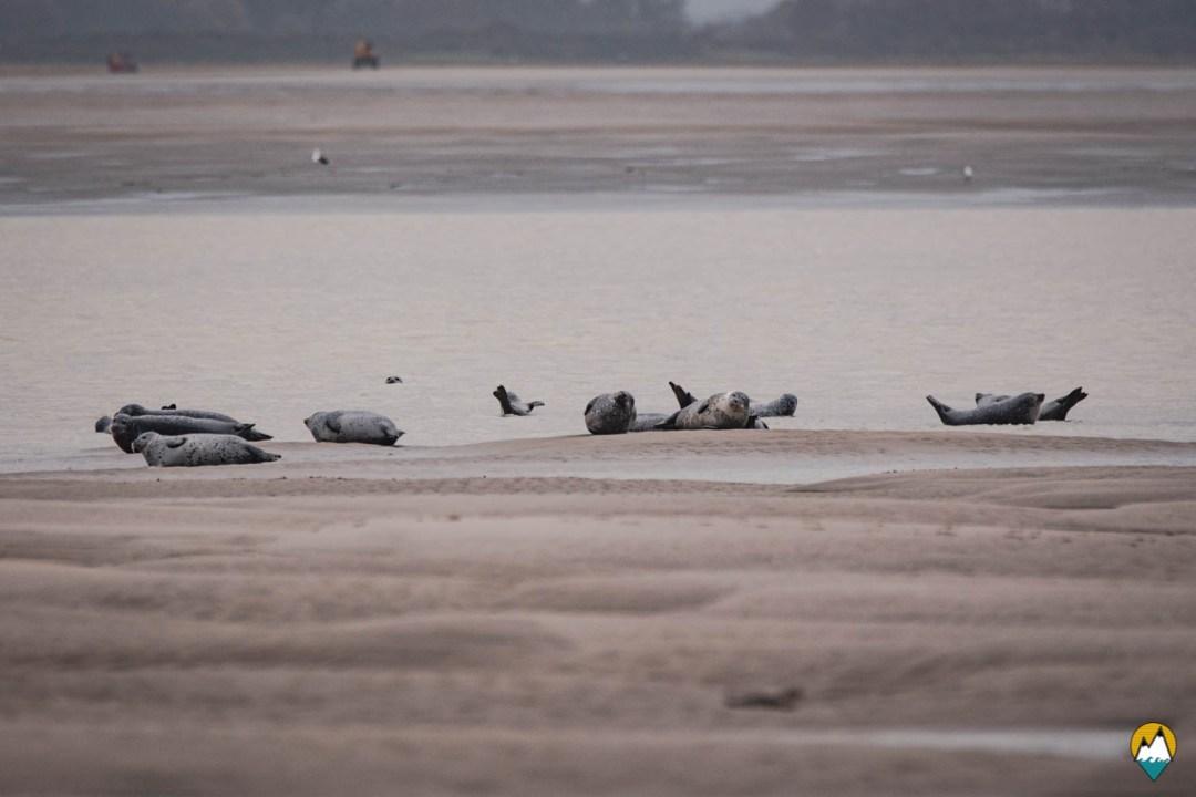 Baie de Somme - Sortie pour observer les phoques