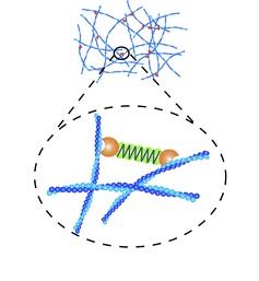 gel_structure